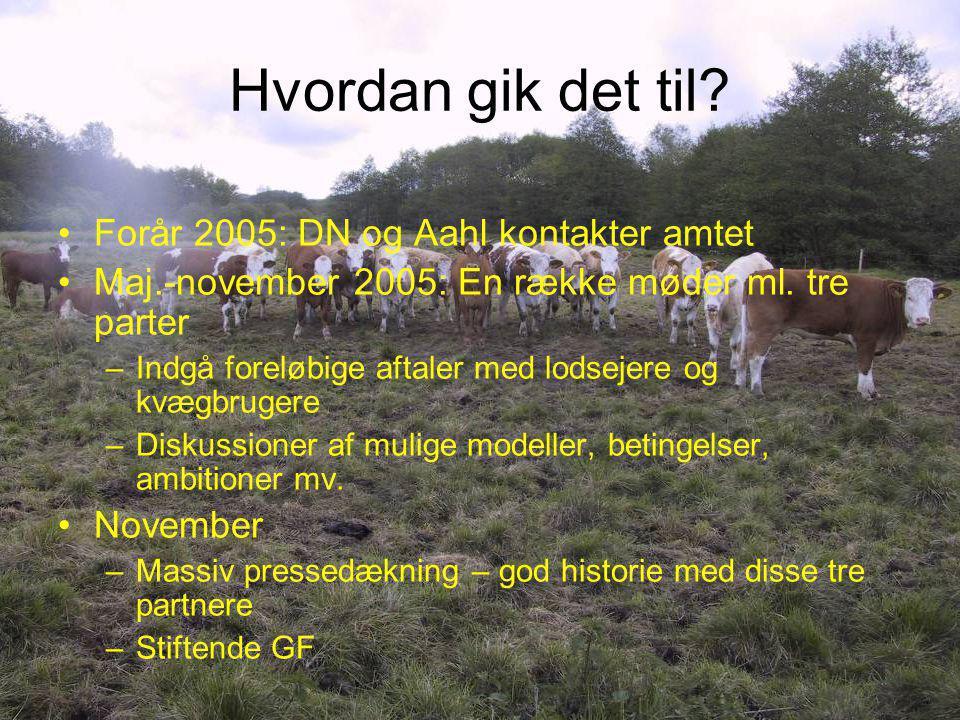 Hvordan gik det til Forår 2005: DN og Aahl kontakter amtet