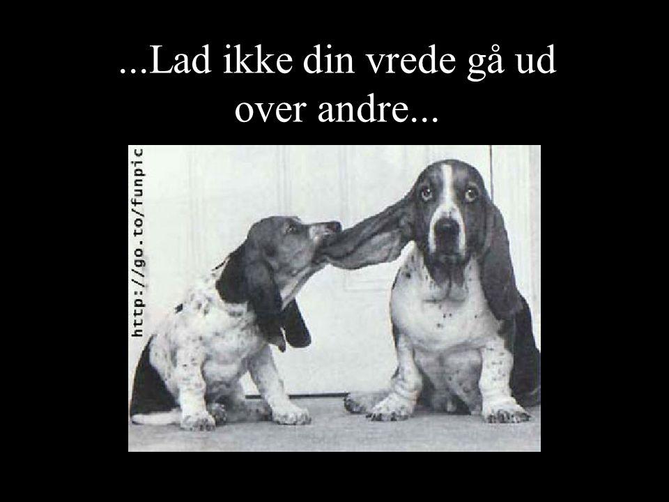 ...Lad ikke din vrede gå ud over andre...