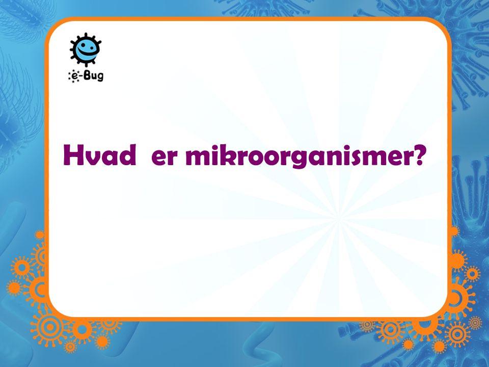 Hvad er mikroorganismer
