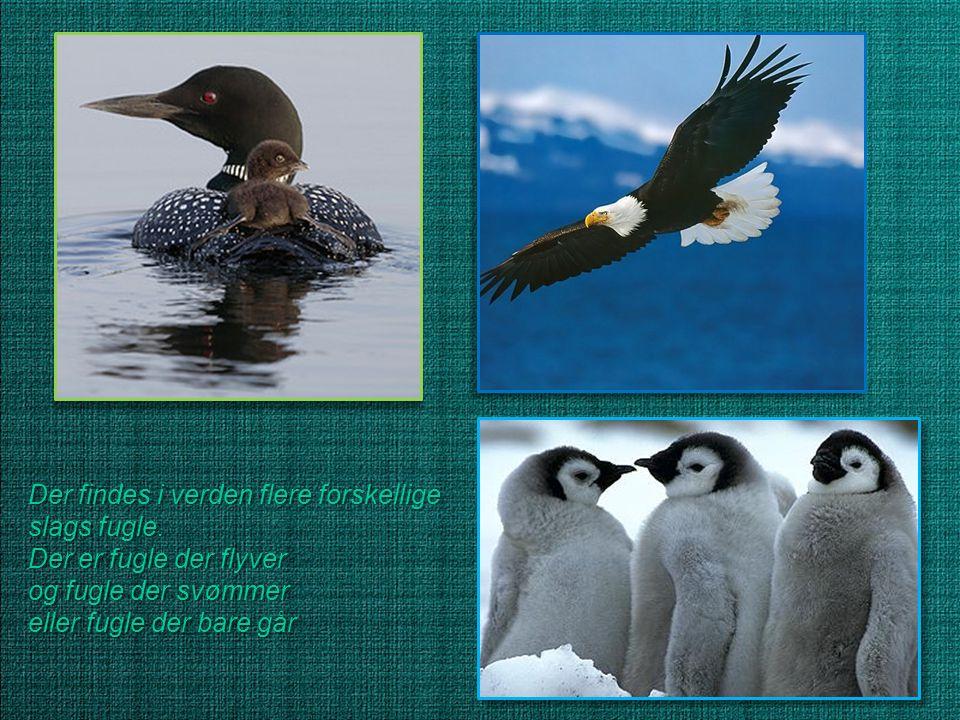 Der findes i verden flere forskellige slags fugle.