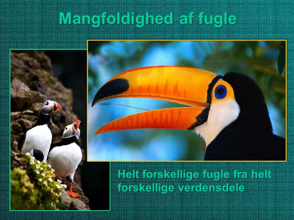 Mangfoldighed af fugle