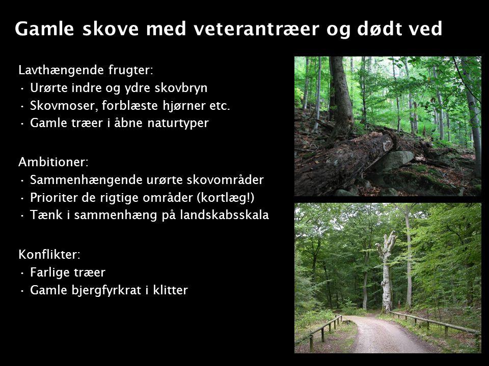 Gamle skove med veterantræer og dødt ved
