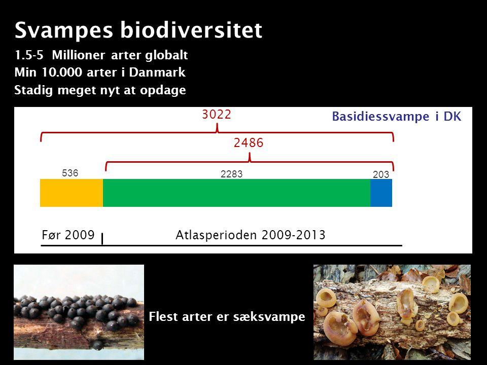 Svampes biodiversitet