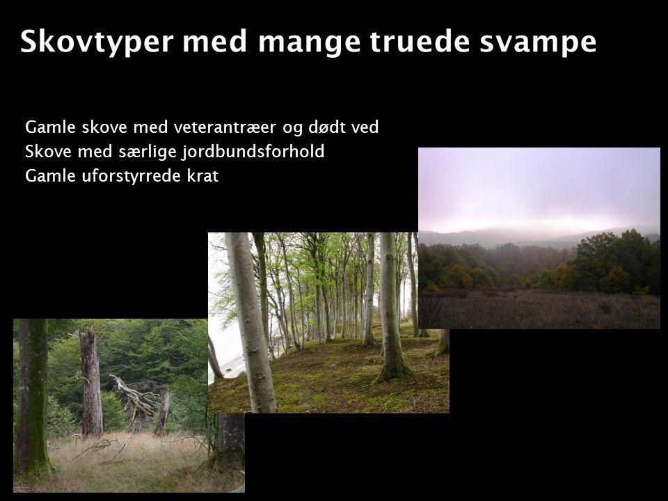 Skovtyper med mange truede svampe