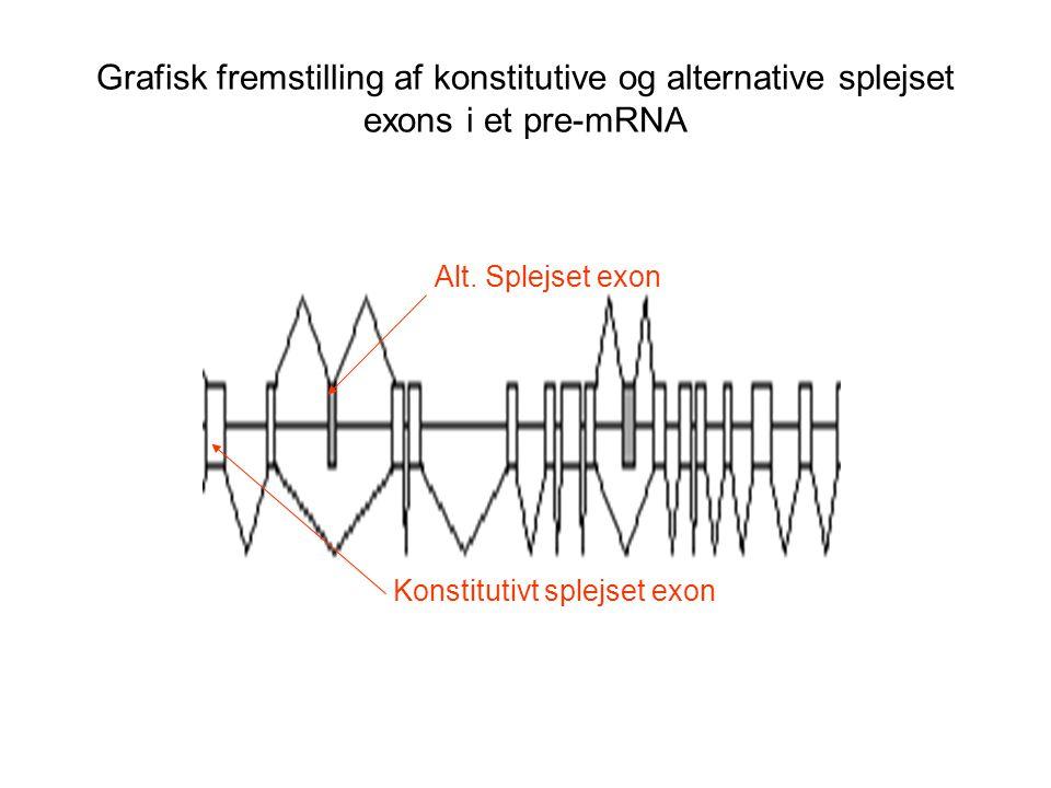 Grafisk fremstilling af konstitutive og alternative splejset exons i et pre-mRNA
