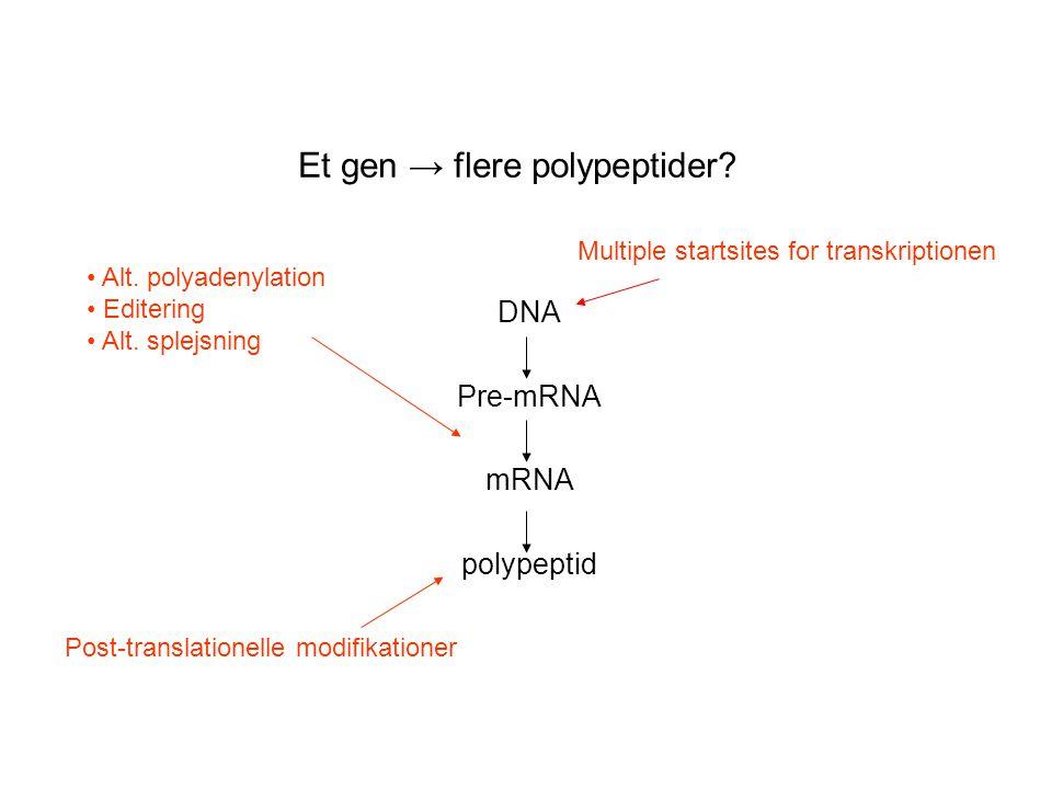 Et gen → flere polypeptider