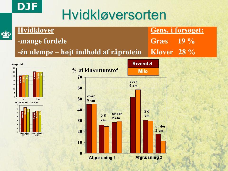 Hvidkløversorten Hvidkløver mange fordele