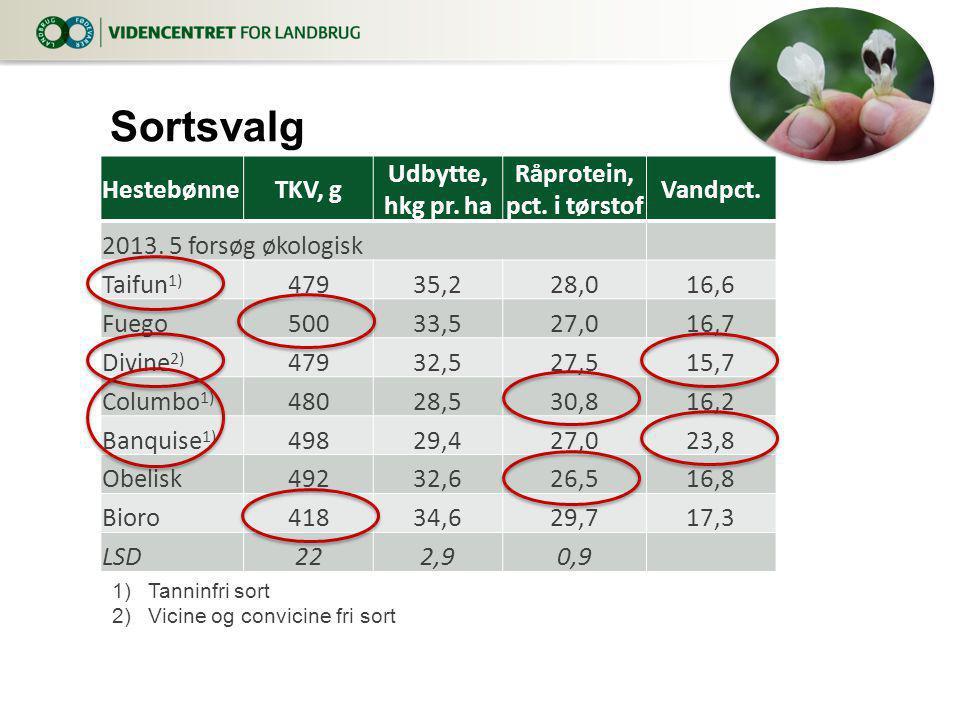 Sortsvalg Hestebønne TKV, g Udbytte, hkg pr. ha Råprotein,