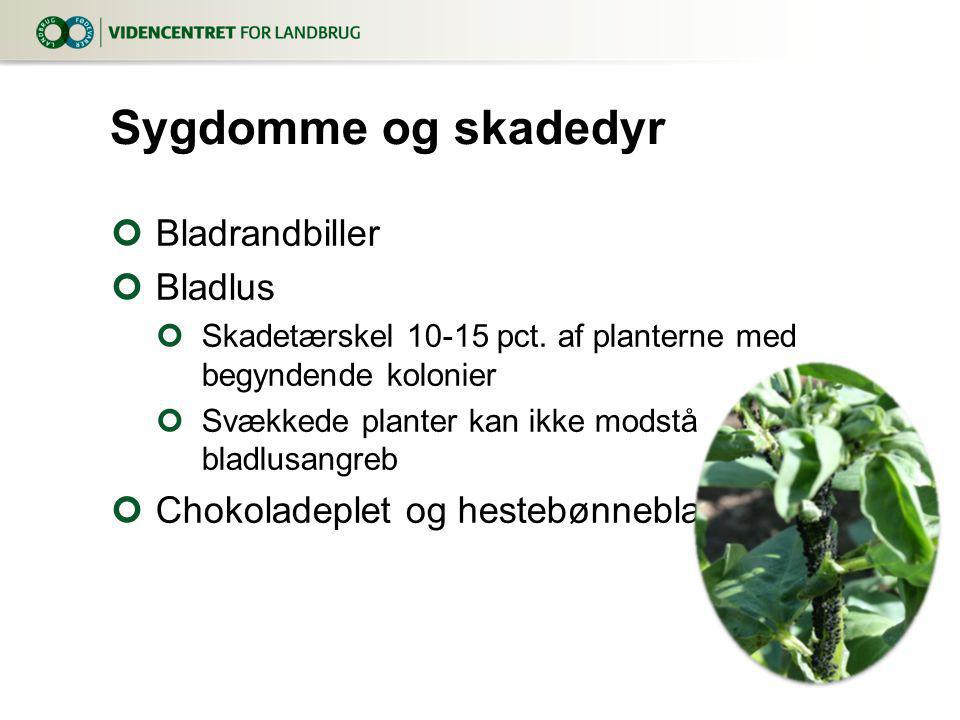 Sygdomme og skadedyr Bladrandbiller Bladlus