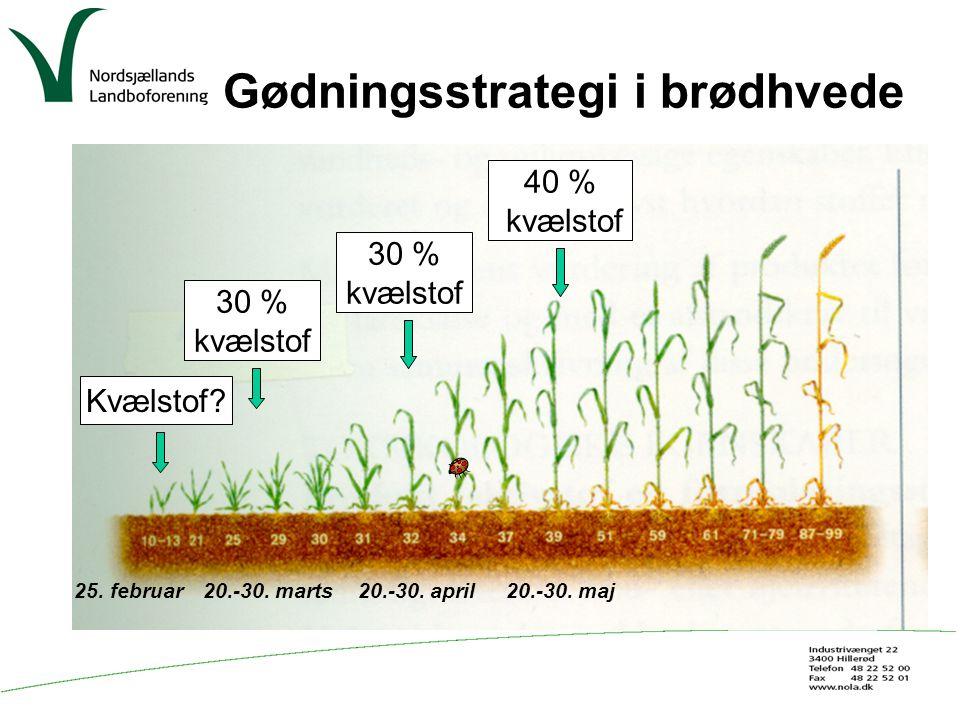 Gødningsstrategi i brødhvede