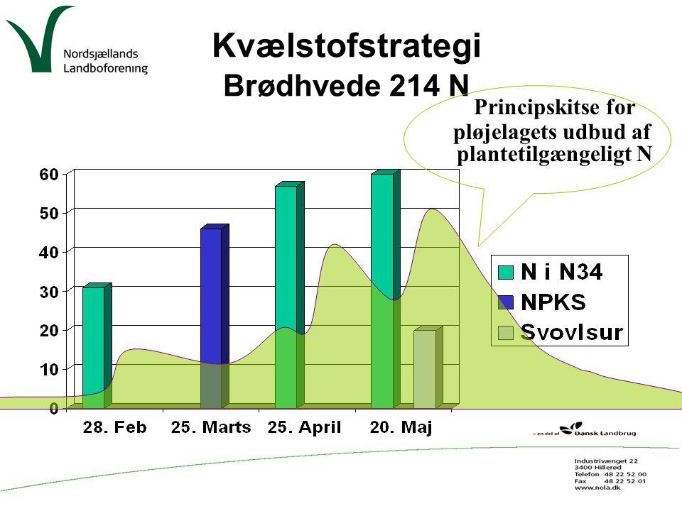 Kvælstofstrategi Brødhvede 214 N