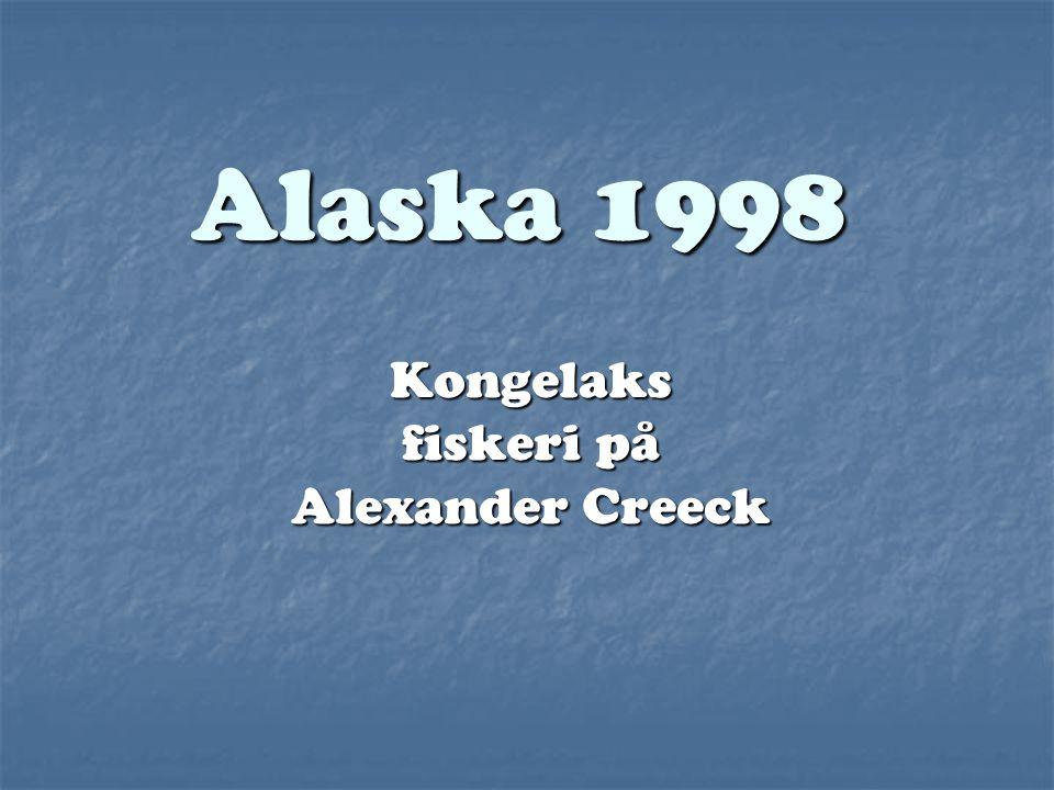 Kongelaks fiskeri på Alexander Creeck