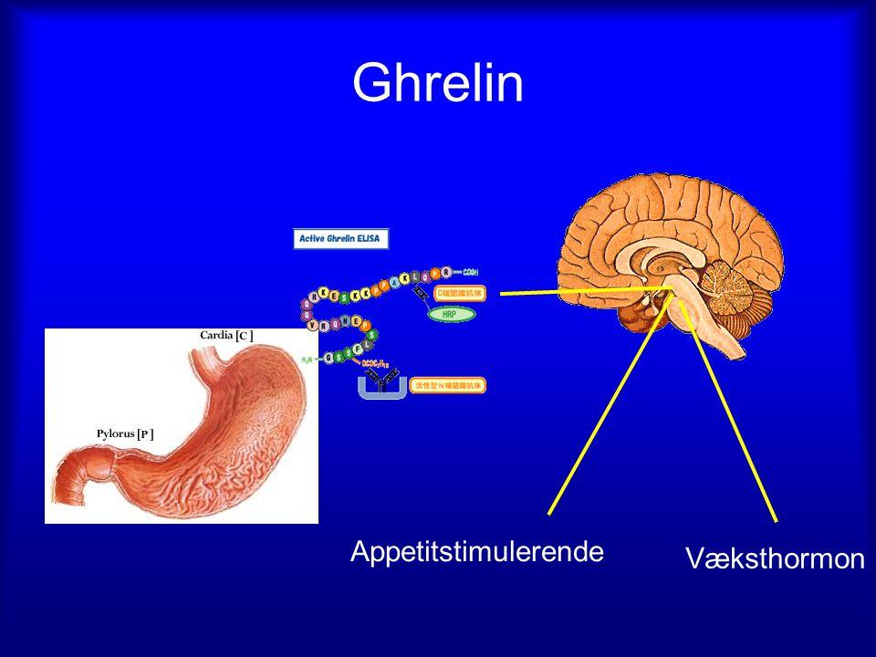 Ghrelin Appetitstimulerende Væksthormon
