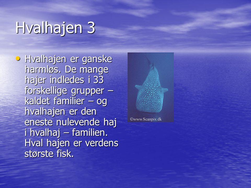 Hvalhajen 3