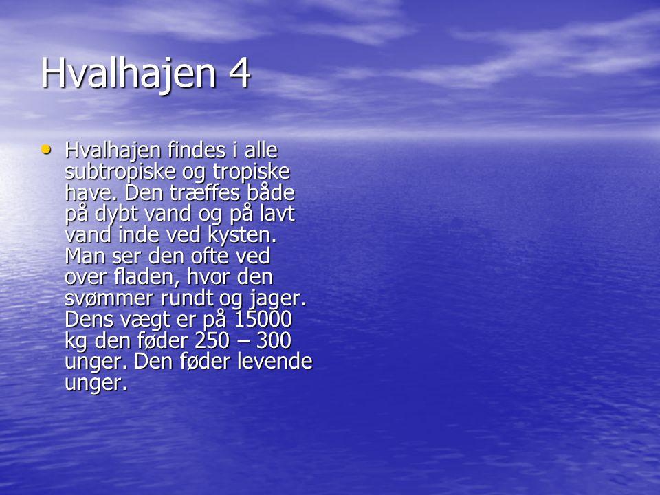 Hvalhajen 4