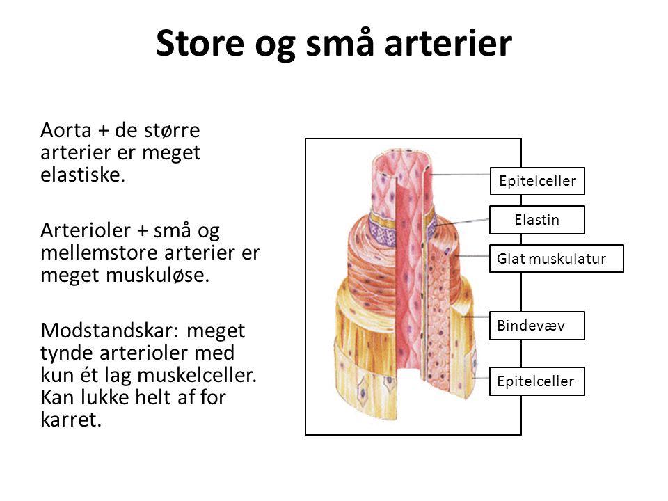Store og små arterier