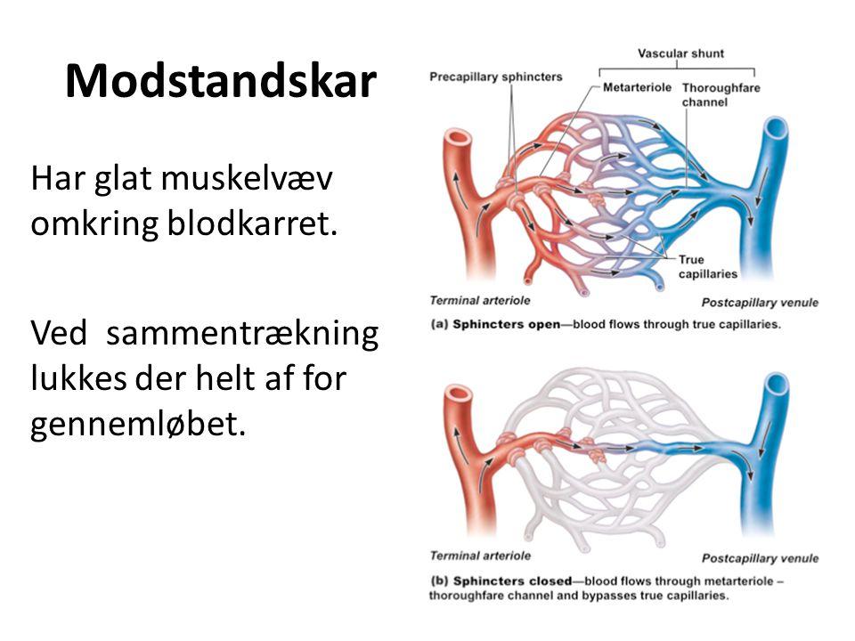 Modstandskar Har glat muskelvæv omkring blodkarret.