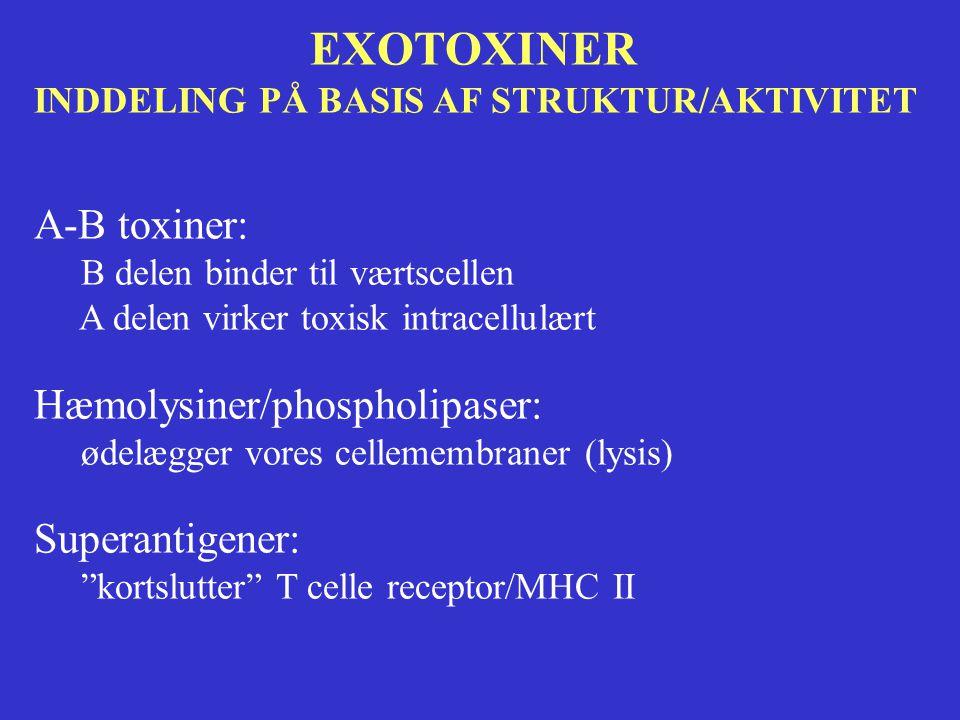 EXOTOXINER A-B toxiner: Hæmolysiner/phospholipaser: Superantigener:
