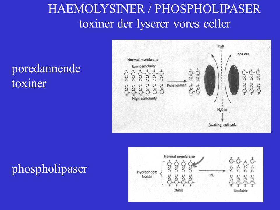 HAEMOLYSINER / PHOSPHOLIPASER toxiner der lyserer vores celler