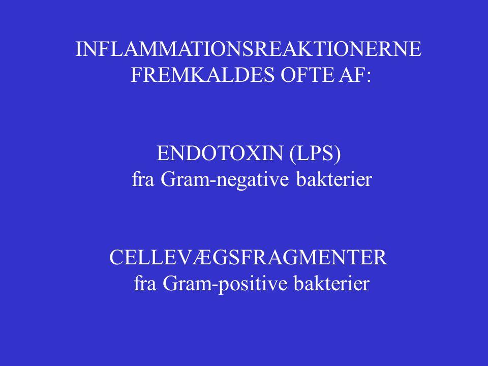 INFLAMMATIONSREAKTIONERNE FREMKALDES OFTE AF: