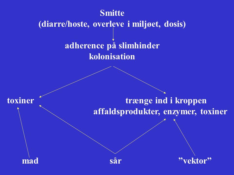 (diarre/hoste, overleve i miljøet, dosis) adherence på slimhinder
