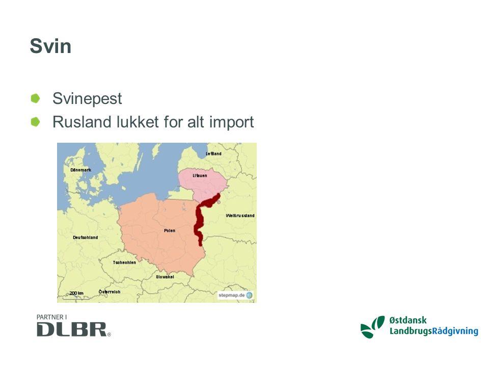 Svin Svinepest Rusland lukket for alt import