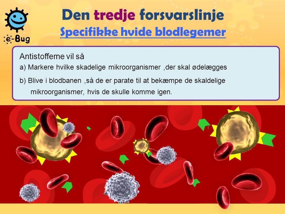 Den tredje forsvarslinje Specifikke hvide blodlegemer