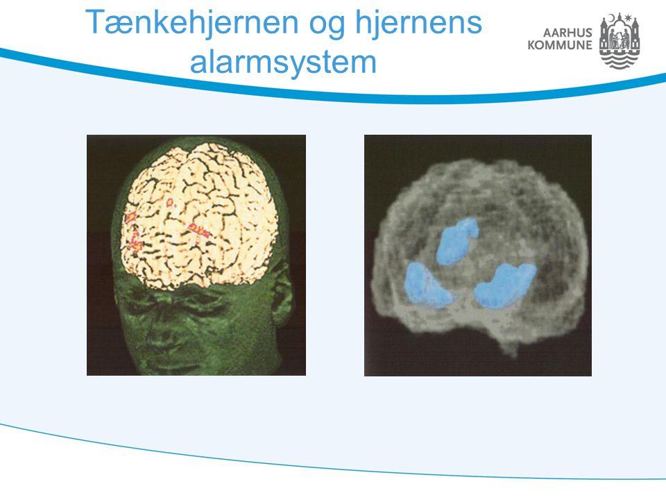 Tænkehjernen og hjernens alarmsystem