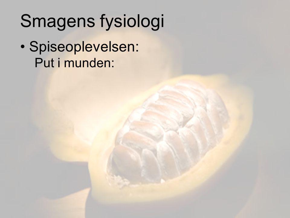 Smagens fysiologi Spiseoplevelsen: Put i munden: