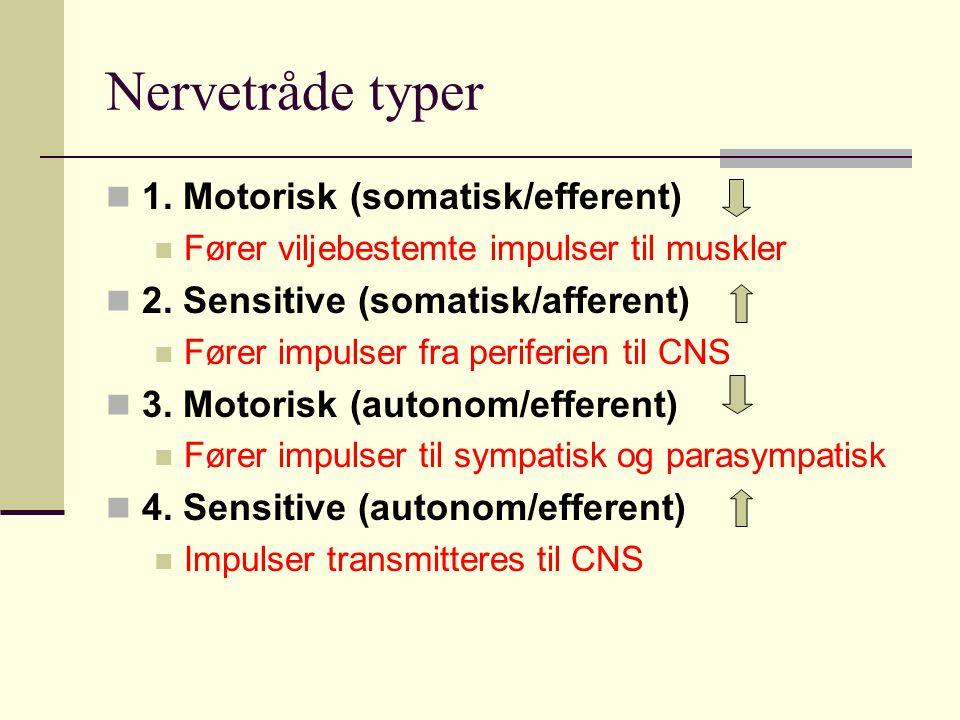 Nervetråde typer 1. Motorisk (somatisk/efferent)