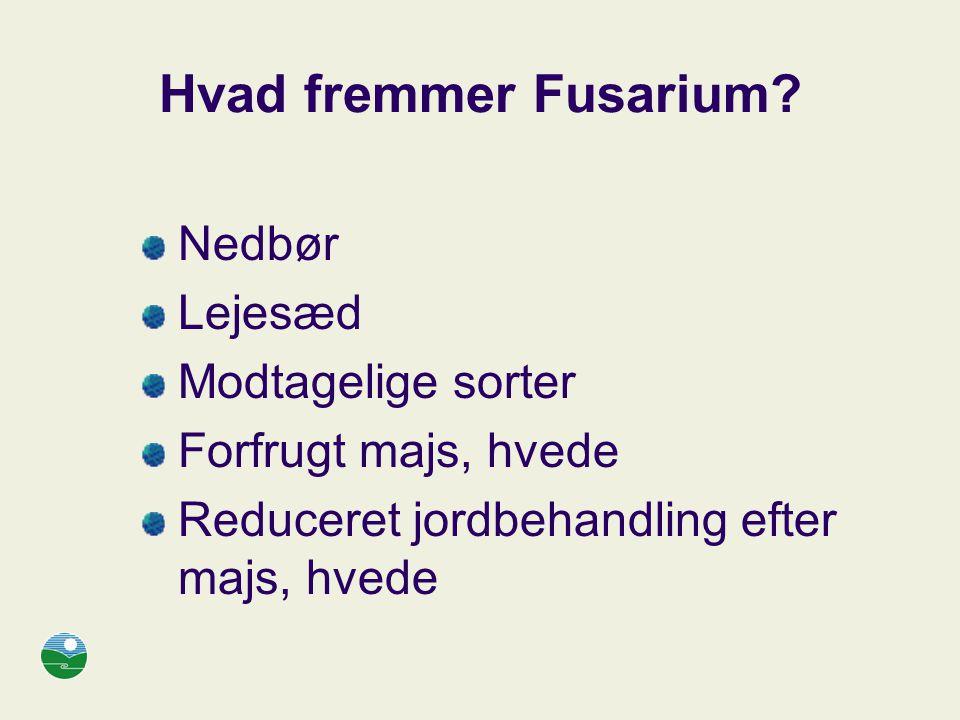 Hvad fremmer Fusarium Nedbør Lejesæd Modtagelige sorter