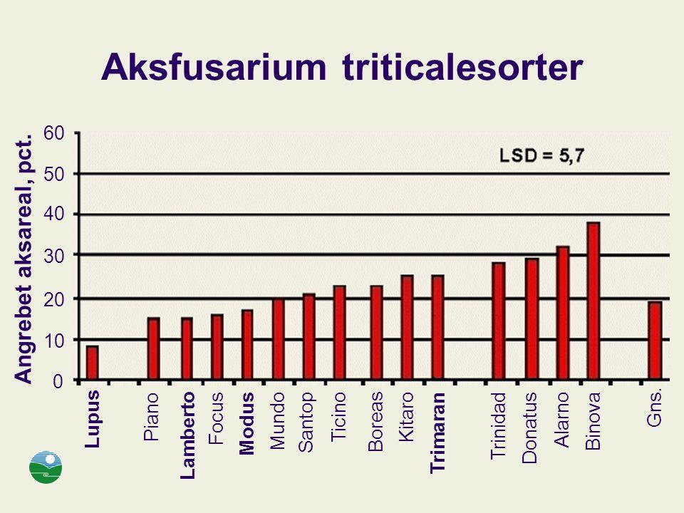 Aksfusarium triticalesorter