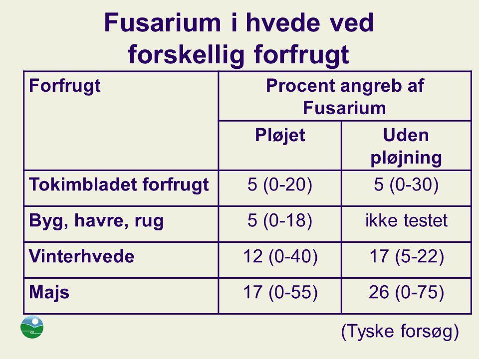 Fusarium i hvede ved forskellig forfrugt