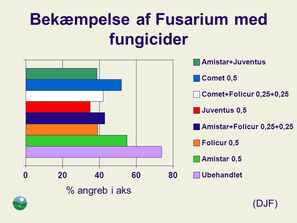 Bekæmpelse af Fusarium med fungicider