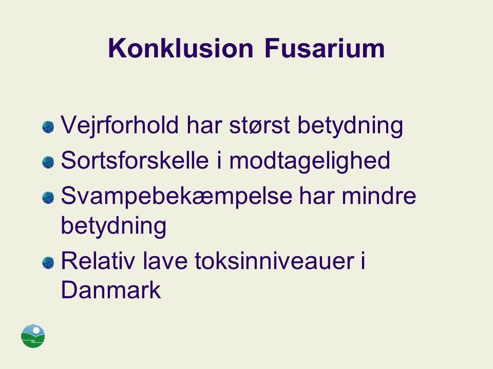 Konklusion Fusarium Vejrforhold har størst betydning