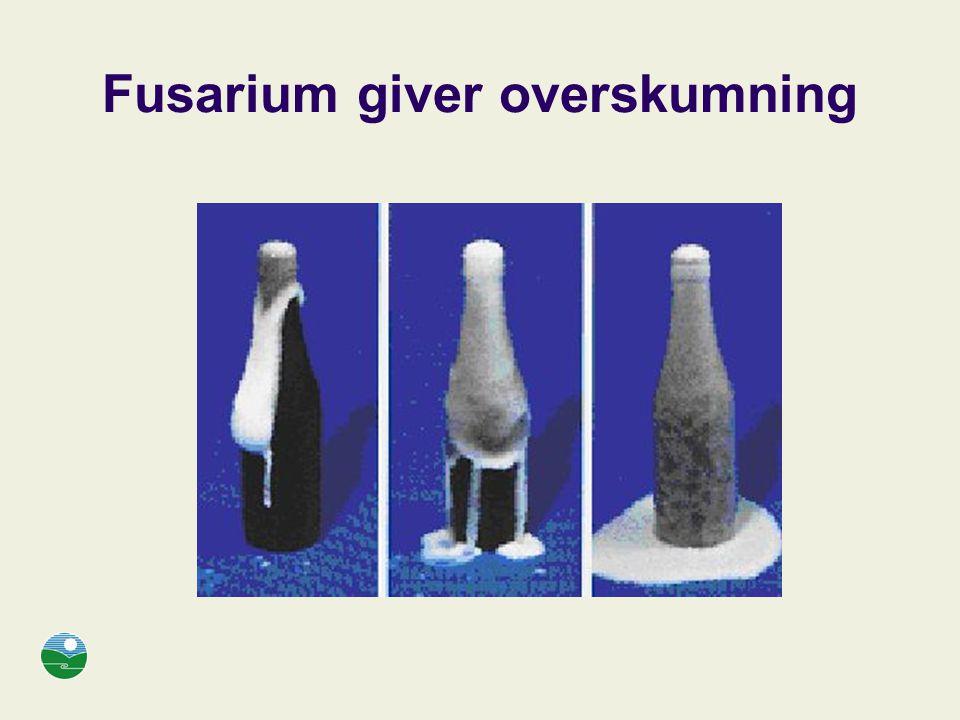 Fusarium giver overskumning