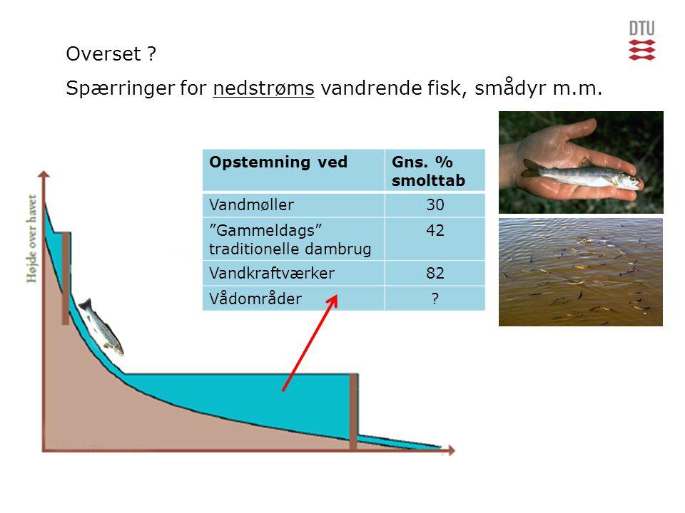 Spærringer for nedstrøms vandrende fisk, smådyr m.m.