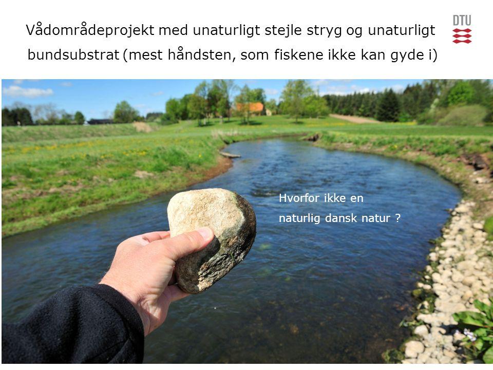 Vådområdeprojekt med unaturligt stejle stryg og unaturligt