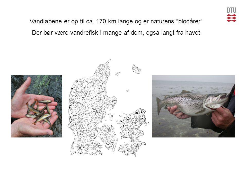 Vandløbene er op til ca. 170 km lange og er naturens blodårer
