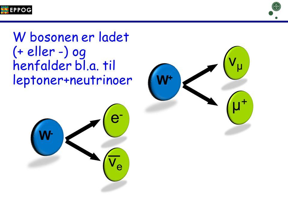 νμ µ+ e- νe W bosonen er ladet (+ eller -) og