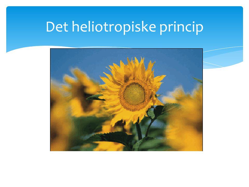 Det heliotropiske princip