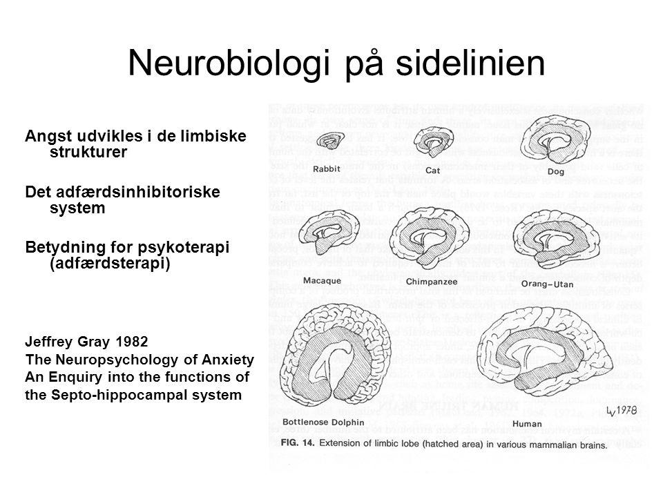 Neurobiologi på sidelinien