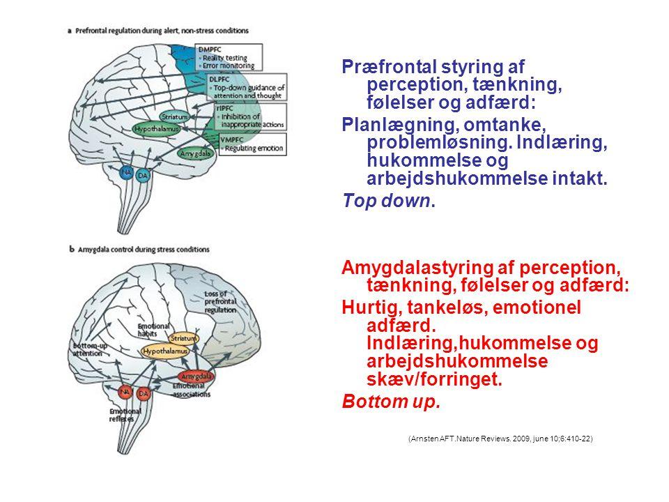 Præfrontal styring af perception, tænkning, følelser og adfærd: