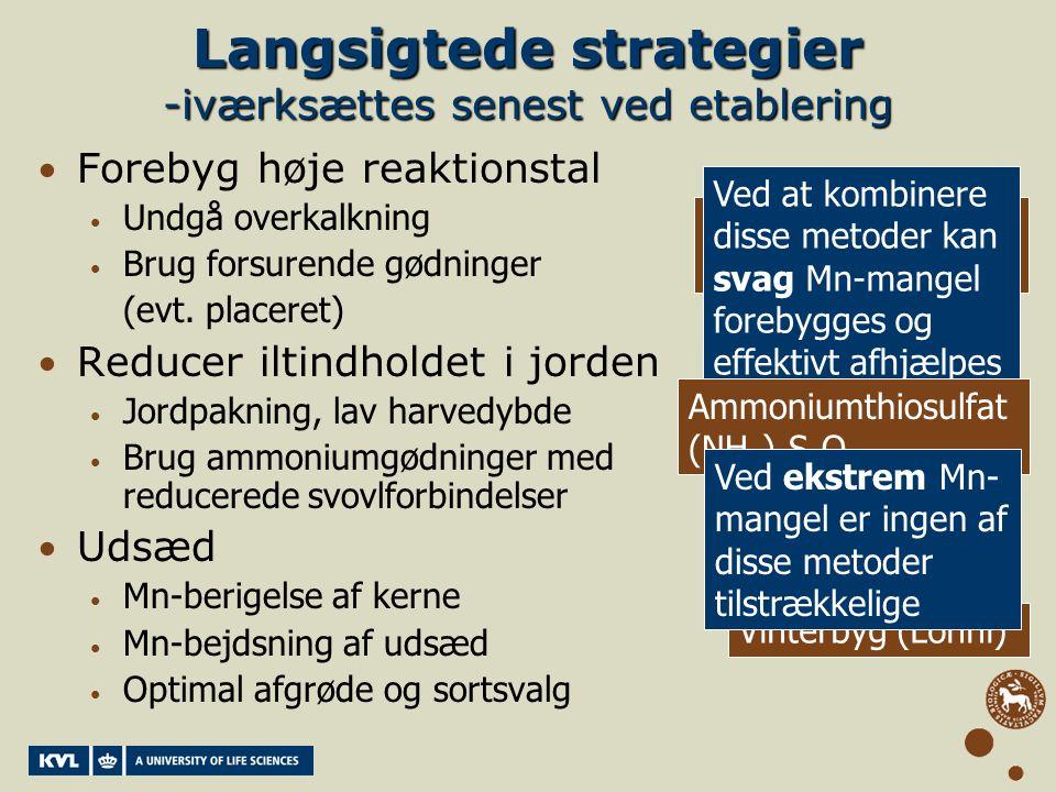 Langsigtede strategier -iværksættes senest ved etablering
