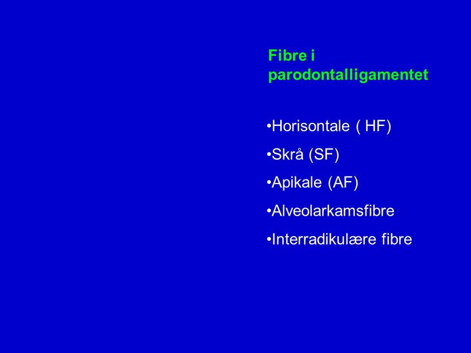 Fibre i parodontalligamentet