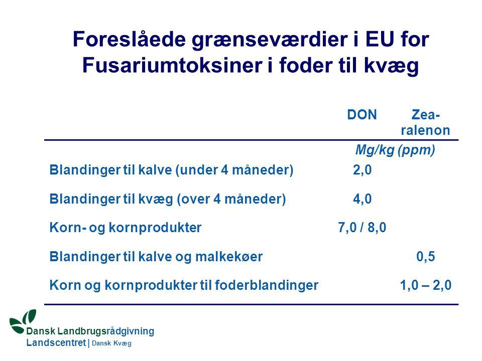 Foreslåede grænseværdier i EU for Fusariumtoksiner i foder til kvæg