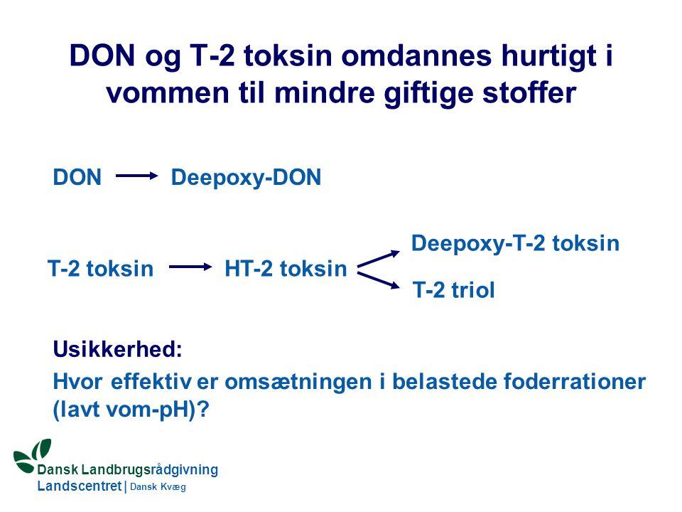 DON og T-2 toksin omdannes hurtigt i vommen til mindre giftige stoffer