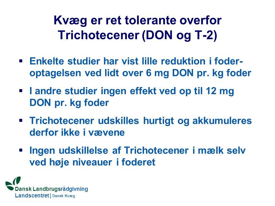 Kvæg er ret tolerante overfor Trichotecener (DON og T-2)