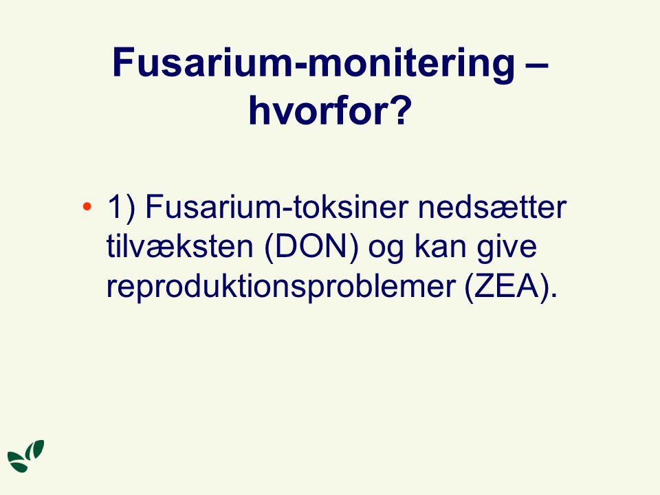 Fusarium-monitering – hvorfor