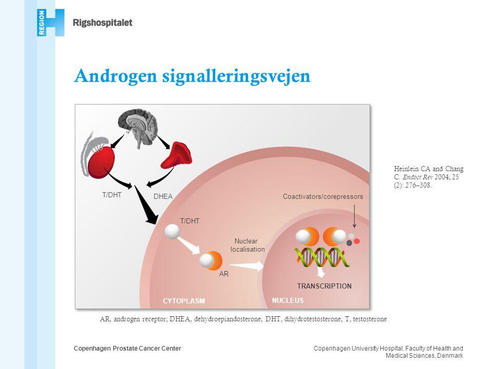 Androgen signalleringsvejen